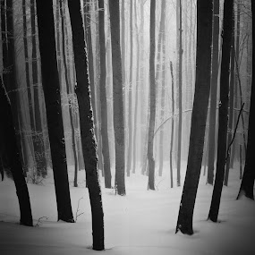 Door of nature by Tamas Valentin - Landscapes Forests ( winter, nature, trees, forest, fogg, landscape, mist )