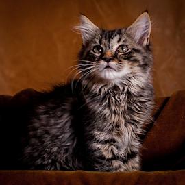 Here Kitty, Kitty by Myra Brizendine Wilson - Animals - Cats Kittens ( cat, tabby cat, gray cat, feline, tabby, kitty,  )