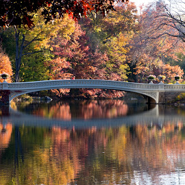 Fall Color by Thomas Shaw - City,  Street & Park  City Parks ( water, orange, reflection, autumn leaves, park, green, lake, yellow, new york, leaves, central park, photography, city, tree, autumn, fall, trees, autumn colors, bridge, new york city )