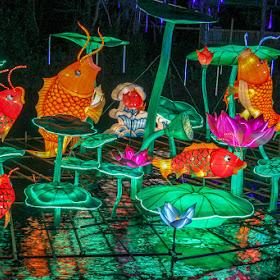 Fish Lanterns.jpg