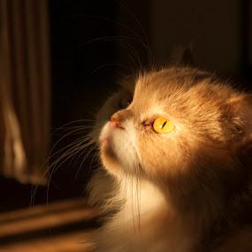 by Bariscan OZKALAY - Animals - Cats Portraits (  )
