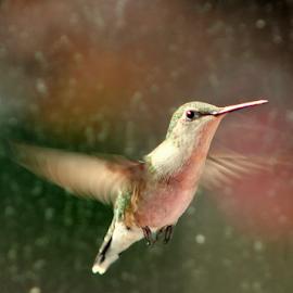 by Susanne Carlton - Animals Birds (  )