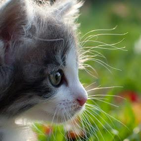 Kika  by Mario Novak - Animals - Cats Portraits