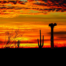 Desert Sunset by Dave Walters - Digital Art Places ( clouds, colors, sunset, digital art, landsxape, magic hour, cactus )