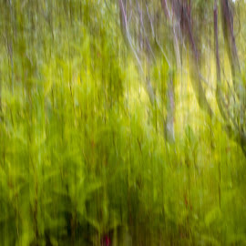 Nature by Edvald Geirsson - Abstract Patterns ( iceland, colors, experiment, trees )