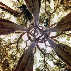 Intimacy by Aga Furtak - Landscapes Forests ( peru, hug, amazon, balance, southamerica, intimacy, amazonia, latinamerica, safety, jungle, serenity, amazonjungle, trees, embrace, relax, tranquil, relaxing, tranquility )