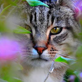 by Martin McCaul - Animals - Cats Portraits