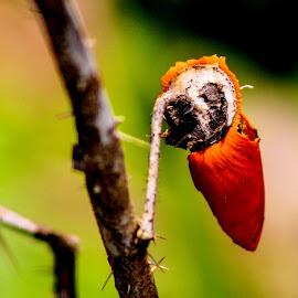 Hoot by David Walters - Abstract Macro ( farm, nature, tree, lumix, owl, fl. )