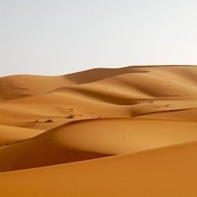 by Sloane Sheldon - Landscapes Deserts