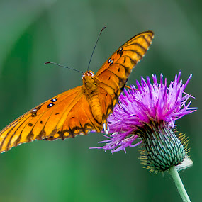 Orange on Purple by Sandy Hurwitz - Animals Insects & Spiders