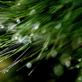 by Daniel Borisovsky - Abstract Water Drops & Splashes