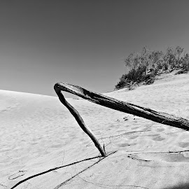 Dunes by Gil Reis - Instagram & Mobile Android ( sand, dunes, life, desert, nature, travel, places )