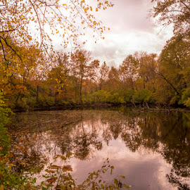 Autumn Reflections by Greg Bennett - Landscapes Forests ( water, autumn, trees, reflections, forest, il, swansea, pond, centennial park )