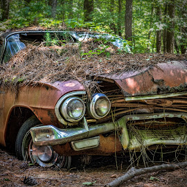 Forgotten by Becky Kempf - Transportation Automobiles ( car, old, automobile, rusty )