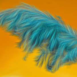 Feathered by Danette de Klerk - Digital Art Things ( digital, blue, nature, manipulation, object )