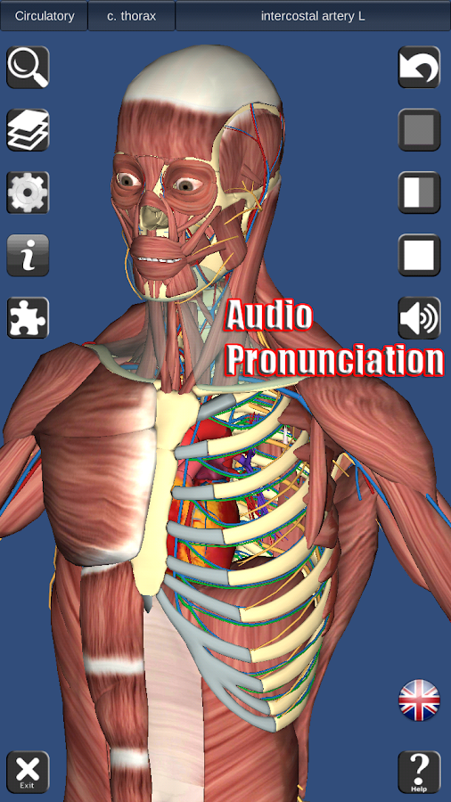 3D Anatomy Screenshot 1