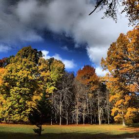 sky overhead by Libuše Kludská - Nature Up Close Trees & Bushes