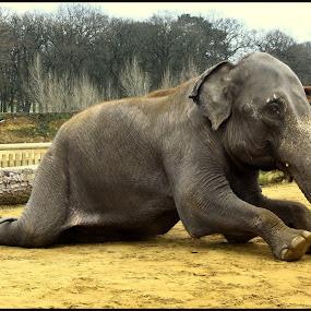 by Suzanna Nagy - Animals Other Mammals ( pwcmovinganimals )