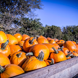by Jackie Eatinger - Nature Up Close Gardens & Produce ( pumpkin patch, grandkids, 2016 )