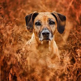 by Lukáš Lang - Animals - Dogs Portraits