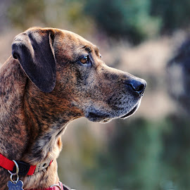Lucy  by Todd Reynolds - Animals - Dogs Portraits