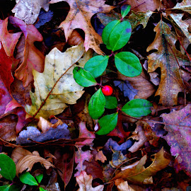 colour on the ground by Martin Stepalavich - Nature Up Close Leaves & Grasses