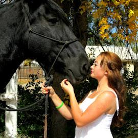 by Lucretia Bittner - Animals Horses
