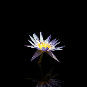 Solitude by Luke Popwell - Nature Up Close Gardens & Produce ( water, reflection, pwcflowergarden, lily, nature up close, black, flower, reflecting, close )