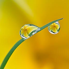 Morning dews...  by Citra Hernadi - Nature Up Close Water