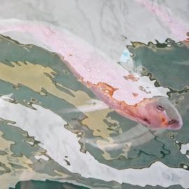 by Alexei Zarya - Animals Fish