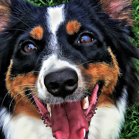 Dixie by Virginia Folkman - Animals - Dogs Portraits ( puppies, dogs, puppy, dog, animal )