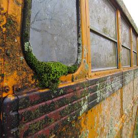 Old Enlightenment by Bella Hutson - Transportation Automobiles ( bus, school, rundown, moss, eduation, weathered,  )