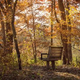 by Chandra Whitfield - City,  Street & Park  City Parks ( bench, park, autumn, fall, trail )