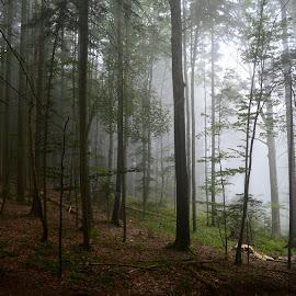 by OL JA - Landscapes Forests