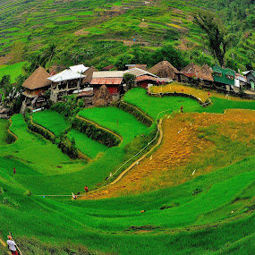 Layers of Rice Terraces by Wilbert Quebral - Landscapes Travel ( village, green, lush, small )