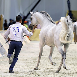 Keeping up with the horse by Samir Belhocine - Sports & Fitness Other Sports