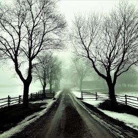 fog in canada by Ashish Gupta - Landscapes Weather ( farm, tree, fog )