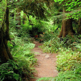 The Enchanted Forest by Janet Young- Abeyta - Landscapes Forests