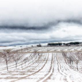Winter at Ribera del Duero-Spain by Daly Sda - Landscapes Prairies, Meadows & Fields ( winter, riberadelduero, snow,  )