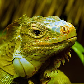 by Rupesh Patel - Animals Reptiles