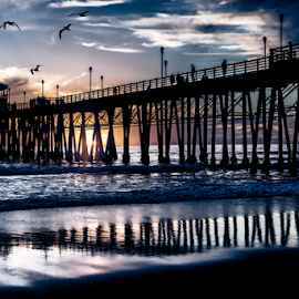 Pelicans Pass by Alan Crosthwaite - Buildings & Architecture Bridges & Suspended Structures ( water, oceanside, oceanside pier, reflections, coastal, dusk, coast, san diego, piers, sunset, sunsets, silhouettes, pelicans )
