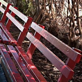 Resting During a Day of Fun in the Sun by Sherry Hallemeier - City,  Street & Park  Amusement Parks ( theme vines, photograph, bench, park, metal benches, theme park, painted benches, relaxing, photo, photography, red benches, taking a break, resting, benches, sitting, tired )