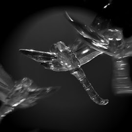 Glass Dragonflies by Diane Underwood - Artistic Objects Glass ( black and white, glass, dragonflies,  )