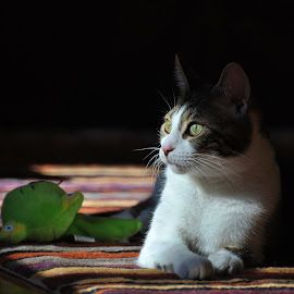 Daisy in shadows.  by Viana Santoni-Oliver - Animals - Cats Portraits ( home, cat, rug, indoor, house, yellow, eyes, toy, nature, stuffed toy, animal, kitten, green, white, tail, shadows, portrait, mammal, sitting, pet, stripped, inside, whiskers, brown, laying, paws, pet toy )