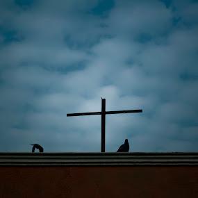 Up in Heaven by Biraj Dutta - Landscapes Cloud Formations ( roof, pigeon, building, blue, jesus, cloud, birds, cross )