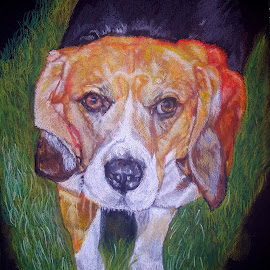 Beagle by Lyndsay Hepburn - Drawing All Drawing ( beaglepastelportrait, mansbestfriend, canineportrait, dogportrait, dogdrawing )