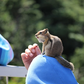 Squirrel Handout by Dave Denny - Animals Other