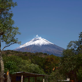 Snowy Volcano by Cristobal Garciaferro Rubio - Nature Up Close Trees & Bushes ( volcano, blue sky, popocatepetl, trees, leaves, snowy volcano, branches )