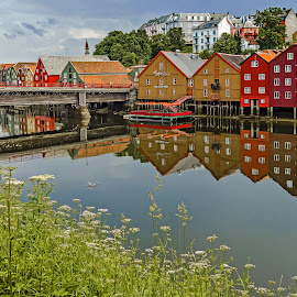 Old Warehouses On The River Trondheim Norway by Graham Mulrooney - City,  Street & Park  Historic Districts ( old, reflection, wooden construction, europe, river nid, plants, reflections, historic, shrubs, norway, kingdom, trondheim, buildings, kingdom of norway, wood framed, water, warehouses, scandinavia, bakklandet, nid, boats, traditional, structures, horizontal, trees, river,  )