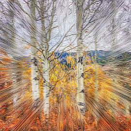 Aspen by Dave Bower - Abstract Light Painting
